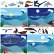 Seascapes and Marine Animals - GraphicRiver Item for Sale