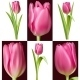 Collection of Pink Tulips - GraphicRiver Item for Sale