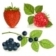 Berries with Leaves - GraphicRiver Item for Sale