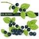 Blueberries - GraphicRiver Item for Sale