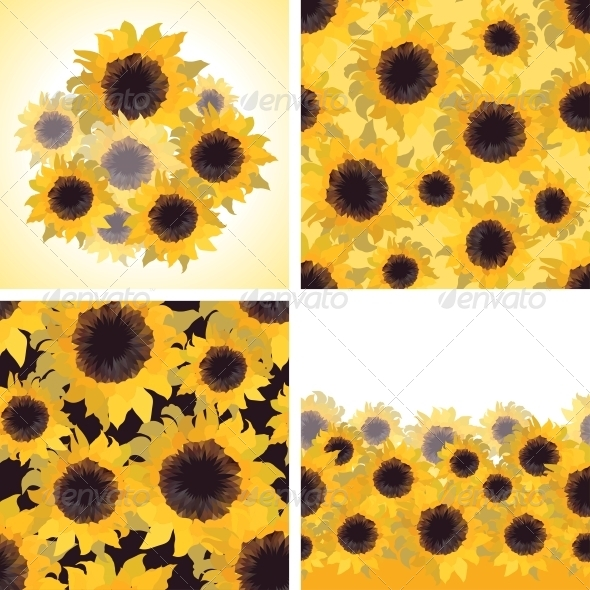 Sunflower Patterns and Backgrounds. - Flowers & Plants Nature