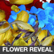 Flower Reveal Transition - VideoHive Item for Sale
