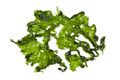 Salted sea lettuce - PhotoDune Item for Sale