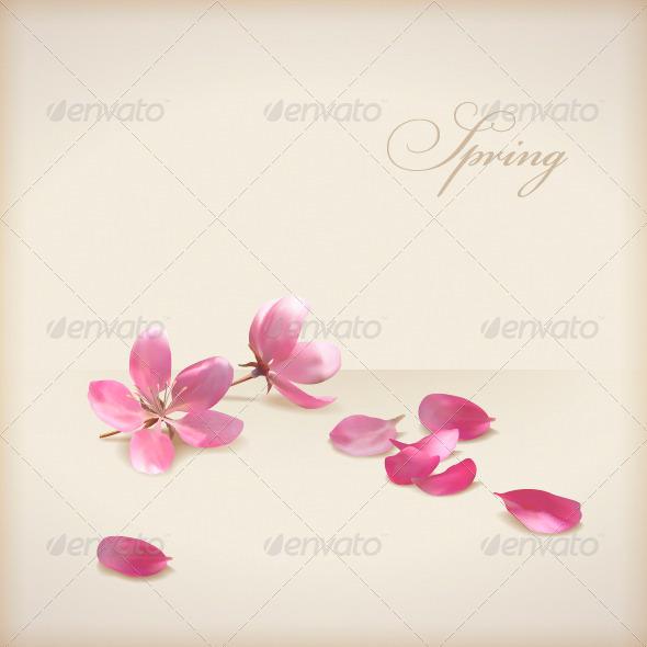 Cherry Blossom Flowers - Flowers & Plants Nature
