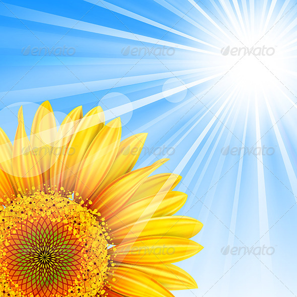 Summer Background  - Seasons Nature