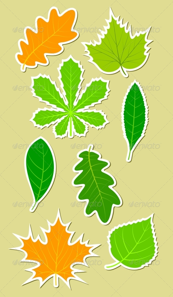 Leaves of different plants - Flowers & Plants Nature