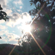 The Sun Behind Orange Trees - VideoHive Item for Sale