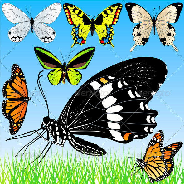 Butterflies Illustrations Set - Animals Characters