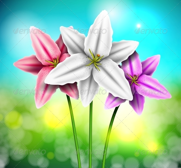 Natural Background with Lilies - Flowers & Plants Nature