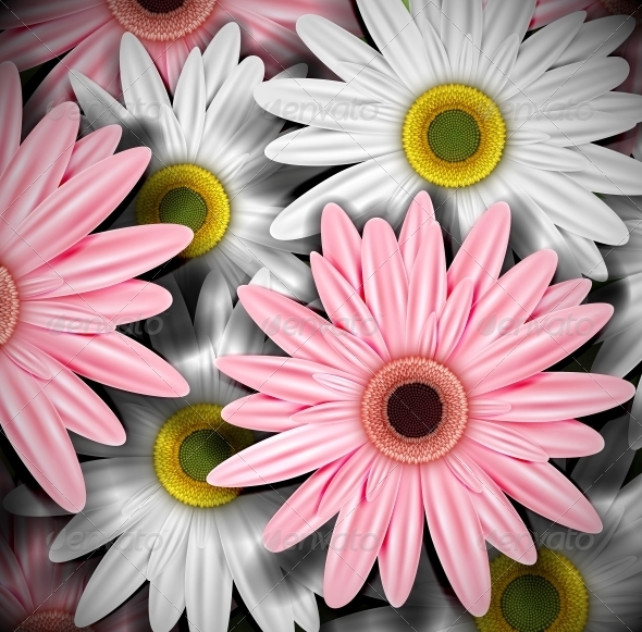 Background with Gerberas - Flowers & Plants Nature