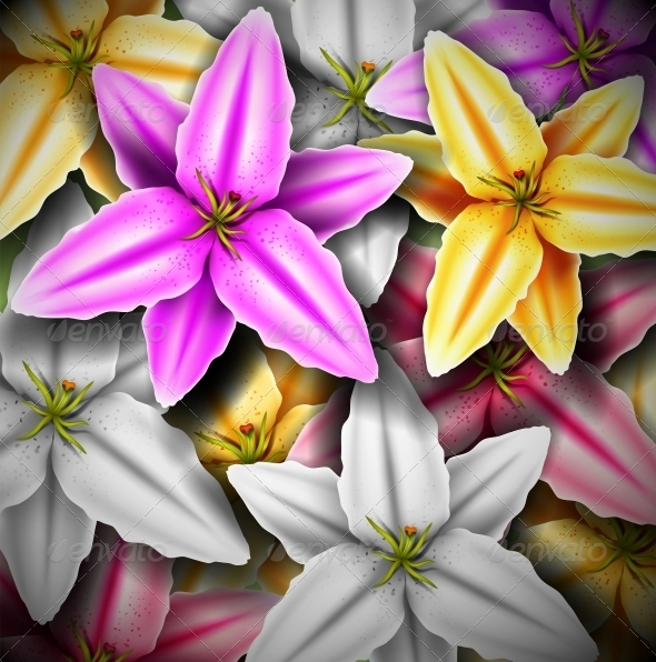 Background with Colorful Lilies - Flowers & Plants Nature