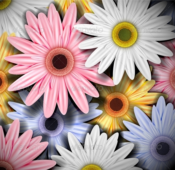 Background with Colorful Gerberas - Flowers & Plants Nature