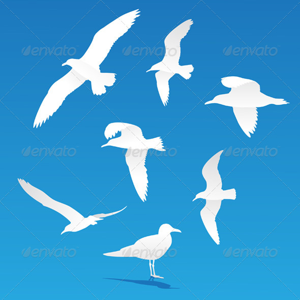 Seagull Silhouettes By Marshalgon Graphicriver