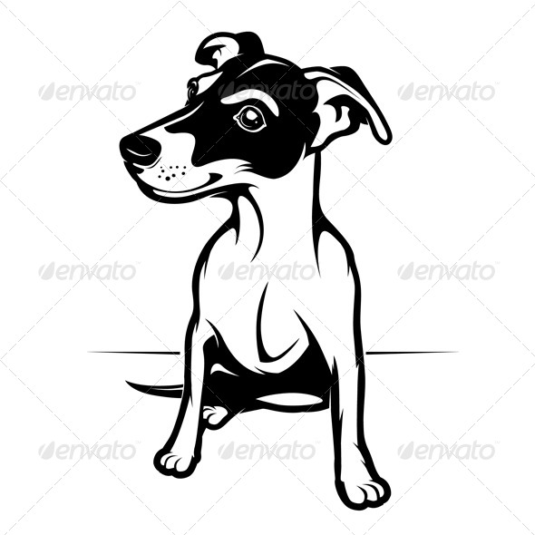 Jack Russell Terrier - Animals Characters