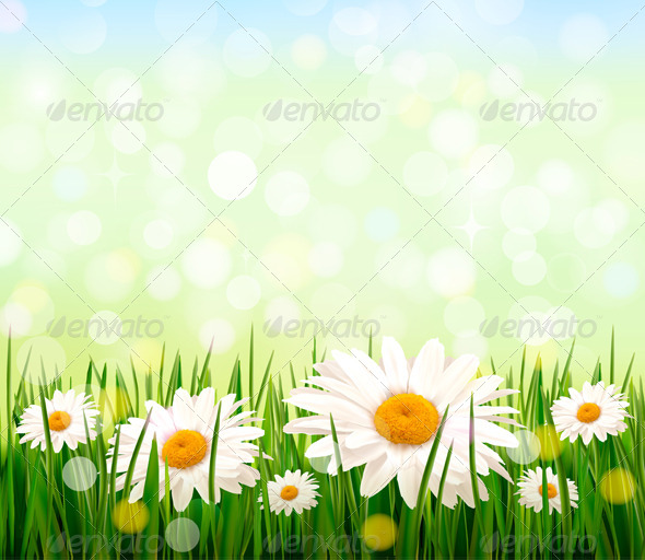 Green Grass and Daisy Background  - Flowers & Plants Nature