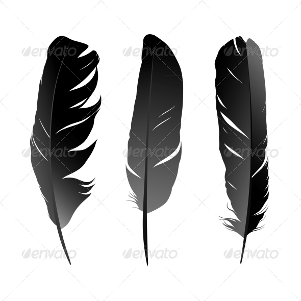 Feather - Decorative Symbols Decorative