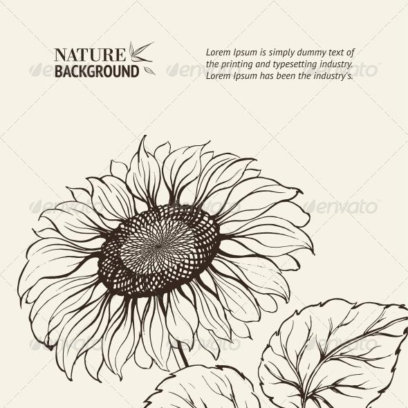 Illustration of Sunflower. - Flowers & Plants Nature