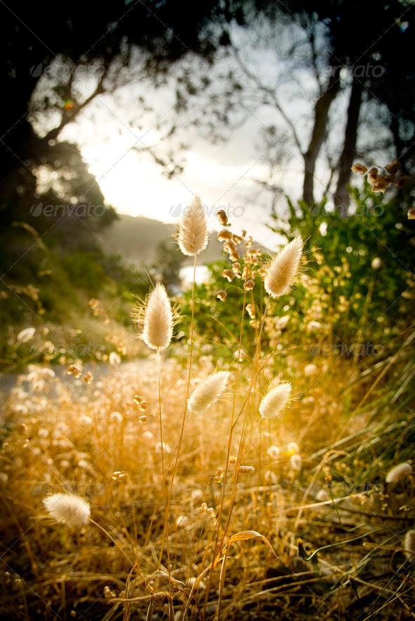 Glowing Foliage - Stock Photo - Images