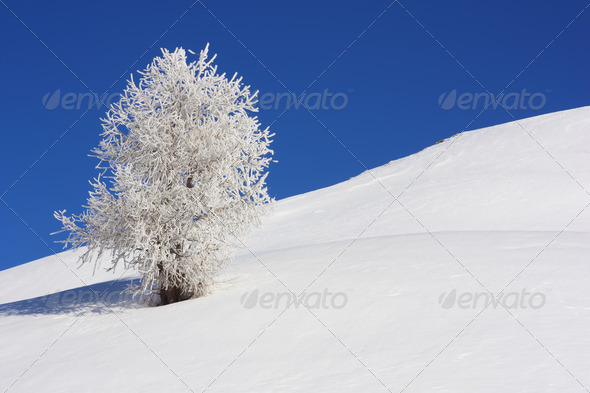 snow covered tree - Stock Photo - Images