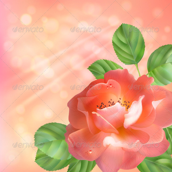 Floral Background with Rose - Flowers & Plants Nature