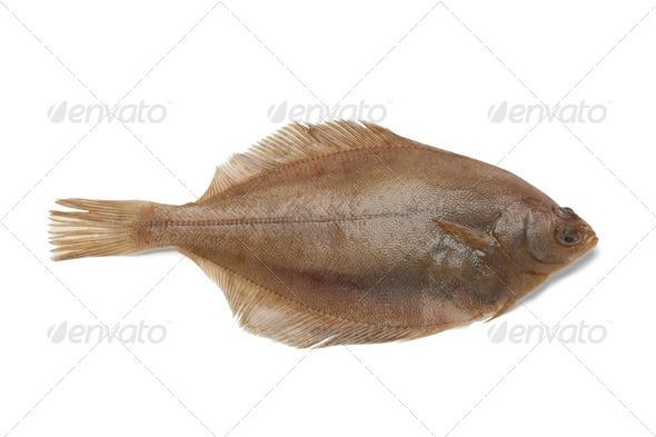 Common dab fish - Stock Photo - Images