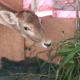 Deer Is Eating - VideoHive Item for Sale