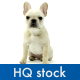 Dog 2 - VideoHive Item for Sale