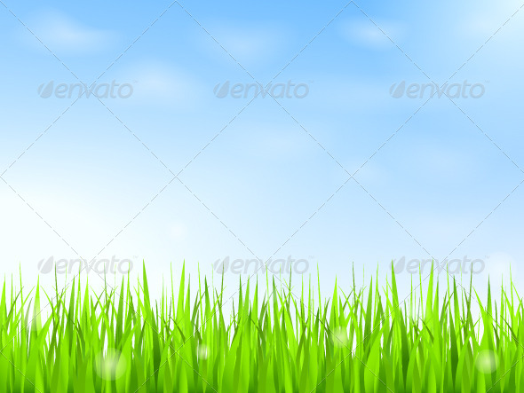 Green Grass and Blue Sky - Landscapes Nature