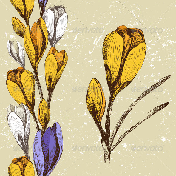 Crocus Flower and Seamless Floral Border  - Flowers & Plants Nature