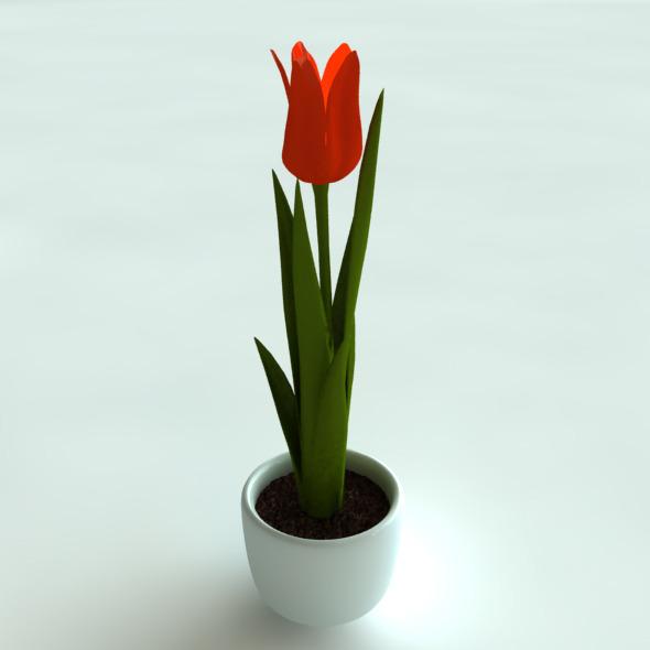 3D Model Tulip in Pot - 3DOcean Item for Sale