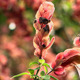 African Shrimp Plants - VideoHive Item for Sale