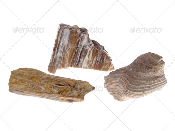 Petrified Wood, Poland - Stock Photo - Images