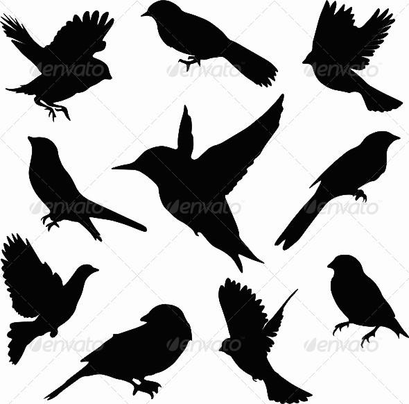 Vector Bird Set - Animals Characters