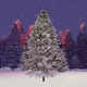Spruce In The Winter Forest - VideoHive Item for Sale
