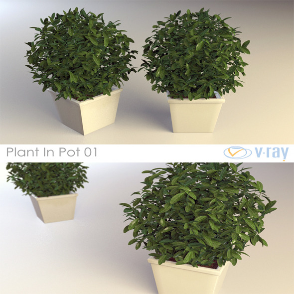 Plant In Pot 01 - 3DOcean Item for Sale