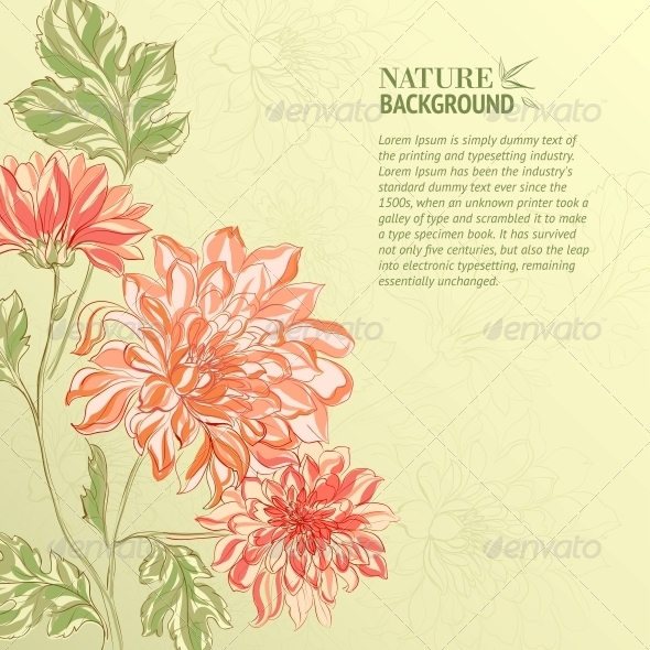 Branch of Chrysanthemum - Flowers & Plants Nature