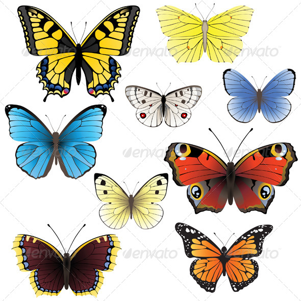Butterfly Set - Nature Conceptual