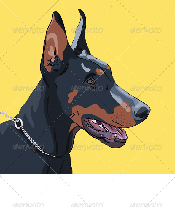 Close-up Serious Dog Doberman Pinscher Breed - Animals Characters
