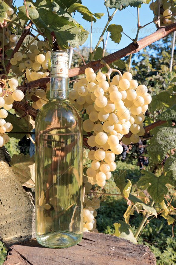 wine bottle and grapevine - Stock Photo - Images