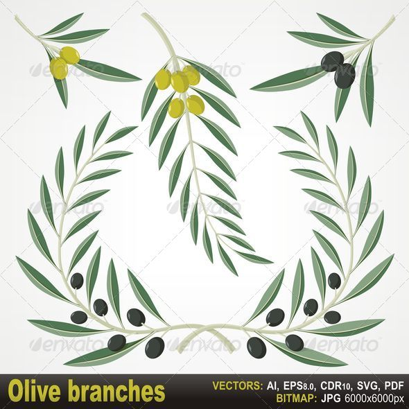 Olive Branches - Flourishes / Swirls Decorative