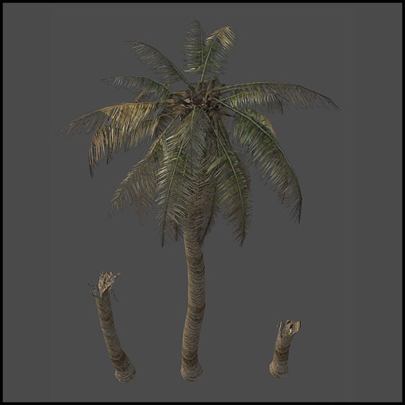 Palm tree destroyed - 3DOcean Item for Sale