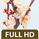 Apricot Flower Blossom  - VideoHive Item for Sale