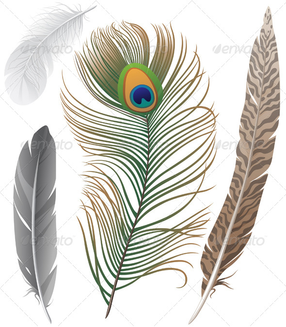 Feathers - Miscellaneous Vectors