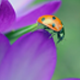 Ladybug In A Crocus - VideoHive Item for Sale