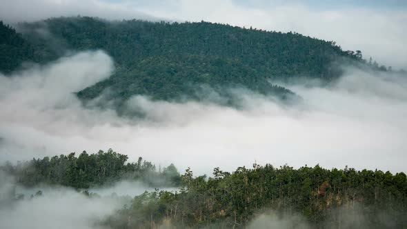VideoHive Fog In Forest 19564968