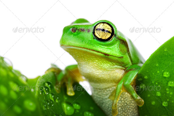 Frog peeking out from the leaves - Stock Photo - Images