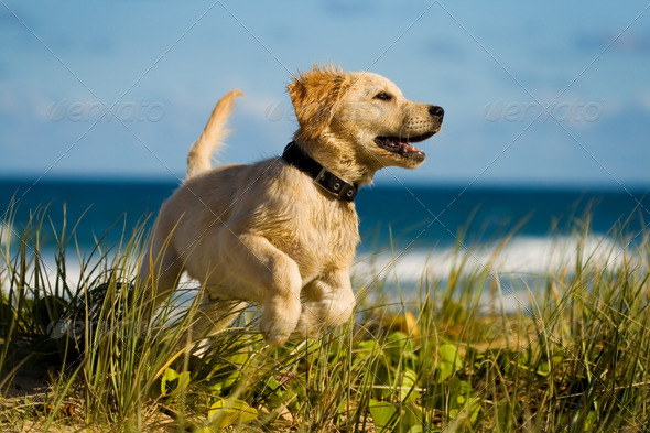 Puppy jumping on the beach - Stock Photo - Images