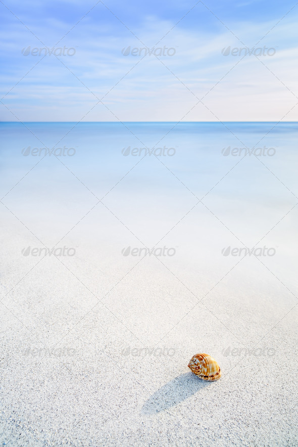Sea Mollusk Shell in a white tropical beach under blue sky - Stock Photo - Images