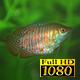 Aquarium And Fish 1 - VideoHive Item for Sale