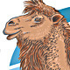 Camel Vector Illustration - GraphicRiver Item for Sale